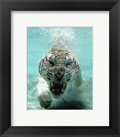 Framed White Bengal Tiger