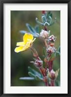 Framed Ice crystals on flowers, Jasper National Park, Canada