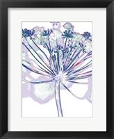 Framed Violet Zen 1