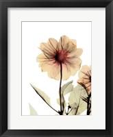 Framed Dalilia