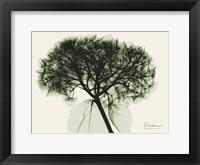 Framed Verduous Hydrangea 1