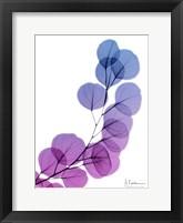 Framed Eucalyptus In Purple