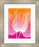 Framed Orchid Tree Pink Orange 1