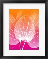 Framed Orchid Tree Pink Orange 1
