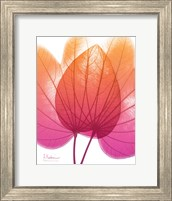 Framed Orchid Tree Pink Orange 2