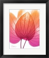 Framed Orchid Tree Pink Orange 2