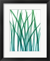 Framed Snow Drop