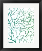 Framed Black Sea Fan