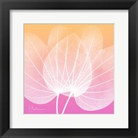 Framed Orchid Tree Pink 1
