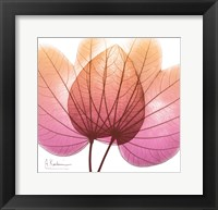 Framed Orchid Tree Pink 2