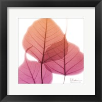 Framed Bo Tree Pink Orange