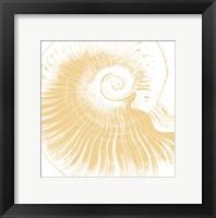 Nautical Shell Framed Print