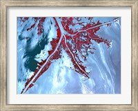 Framed False Color Satellite View of the Very tip of the Mississippi River Delta