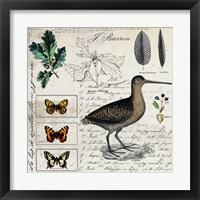 Framed Botanical Bird
