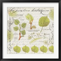 Framed Botanical Jardins