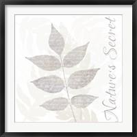 Framed Nature Set Leaves