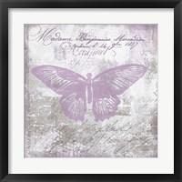 Framed Vintage Butterfly I Mauve