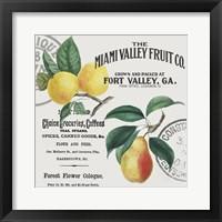 Framed Vintage Fruit