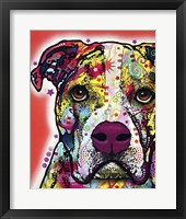 Framed American Bulldog 2