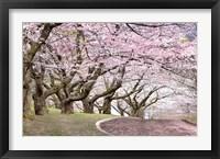 Framed Blossom Hill