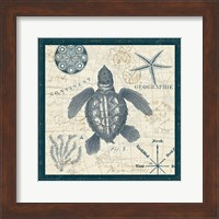 Framed Ocean Life VI