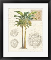 Framed Vintage Palm Study I