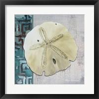 Sand Dollar 1 - Side Border And Turquoise Crackle Back Framed Print