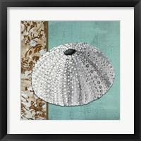 Silver Sea Urchin - Tan Side Border Teal Crackle Back Framed Print
