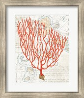 Framed Textured Coral IV