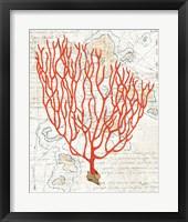 Framed Textured Coral IV