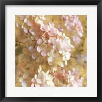 Framed Gilded Hydrangea I