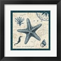 Ocean Life V Framed Print