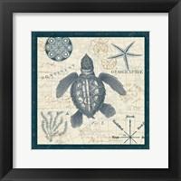 Ocean Life VI Framed Print