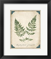 Framed Vintage Ferns VII