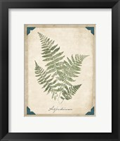 Framed Vintage Ferns IX