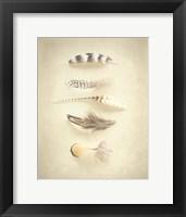 Framed Feathers III