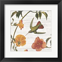 Vintage Hummingbird I Framed Print