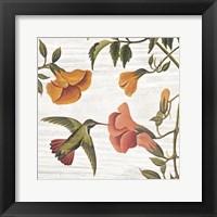Vintage Hummingbird II Framed Print