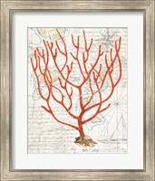 Framed Textured Coral I