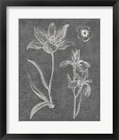 Framed Eden Spring II Gray