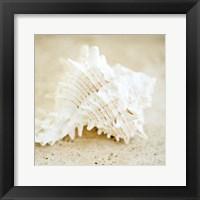 Framed Seashore Shells II