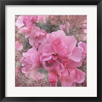 Framed Fresh Rose I