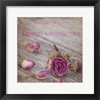 Rose Romance II Framed Print