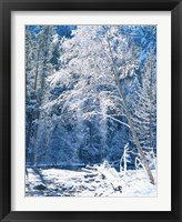 Framed Snow covered trees along Merced River, Yosemite Valley, Yosemite National Park, California