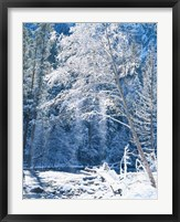 Framed Snow covered trees along Merced River, Yosemite Valley, Yosemite National Park, California