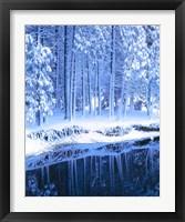 Framed Winter, Conifers, Merced River, Yosemite Valley CA