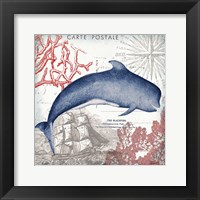 Coastal Sea Life VI Framed Print