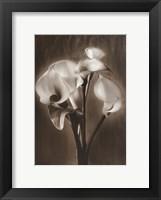 Framed Calla Bouquet