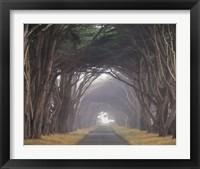 Framed Corridor of Cypress