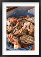 Framed Dungeness Cooked Crab, Queen Charlotte Islands, Canada